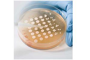 Microbial biostimulants